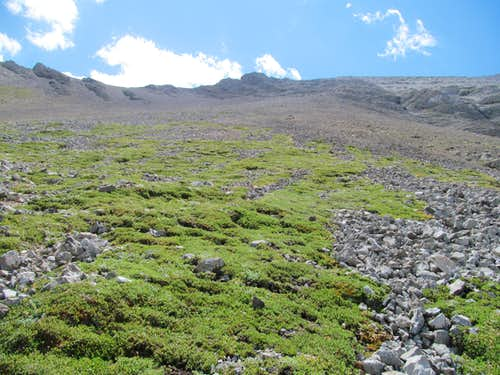 tundra and scree of north slopes