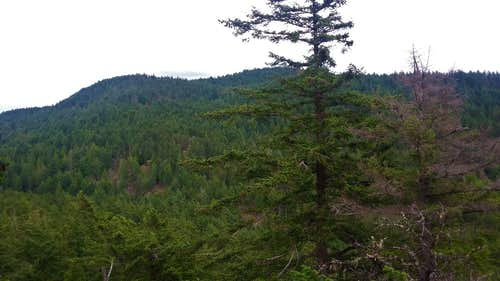 Turtleback Mountain