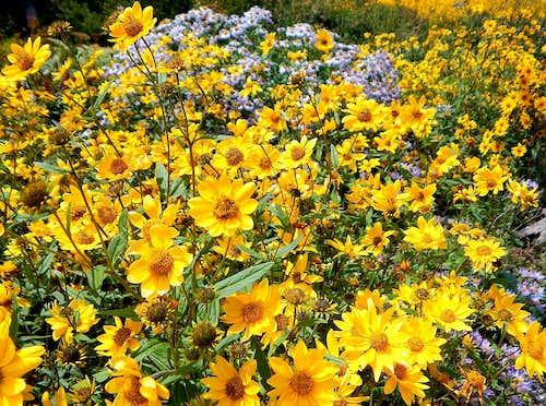 <i>Zapach kwiatów tańczących,</i><br> (The Scent of Dancing Flowers)