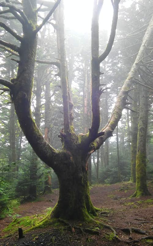 Tree near the summit