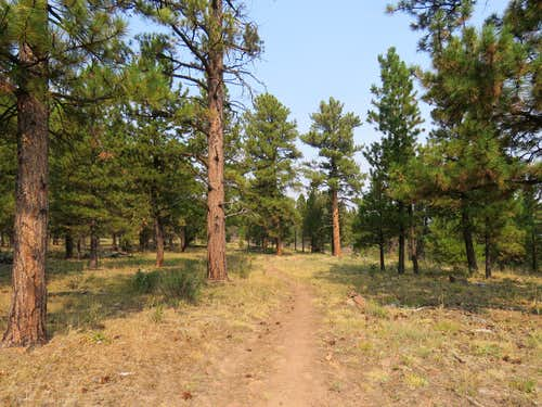 Trail in the sparse forest