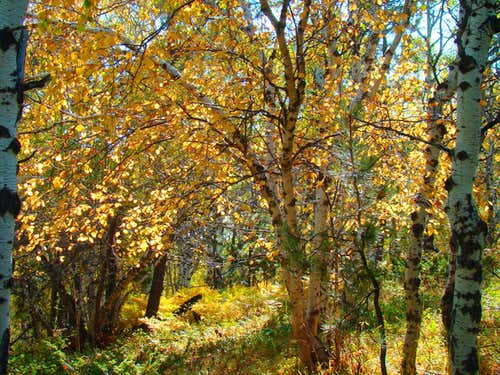 Old Baldy Trail Autumn Foliage