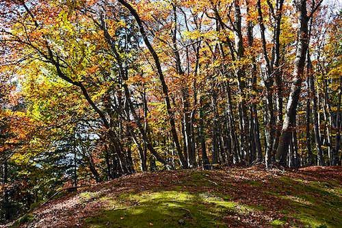 Autumn on Smokuski vrh