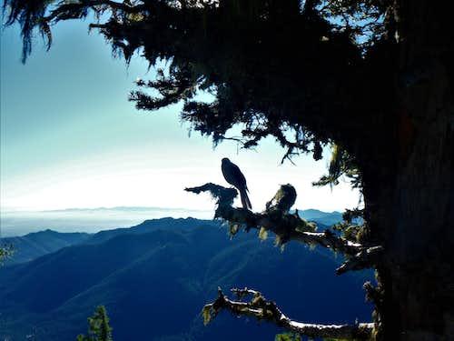 Bird on a tree!