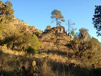 Xerophile shrubland at Cerro Derrumbada Roja