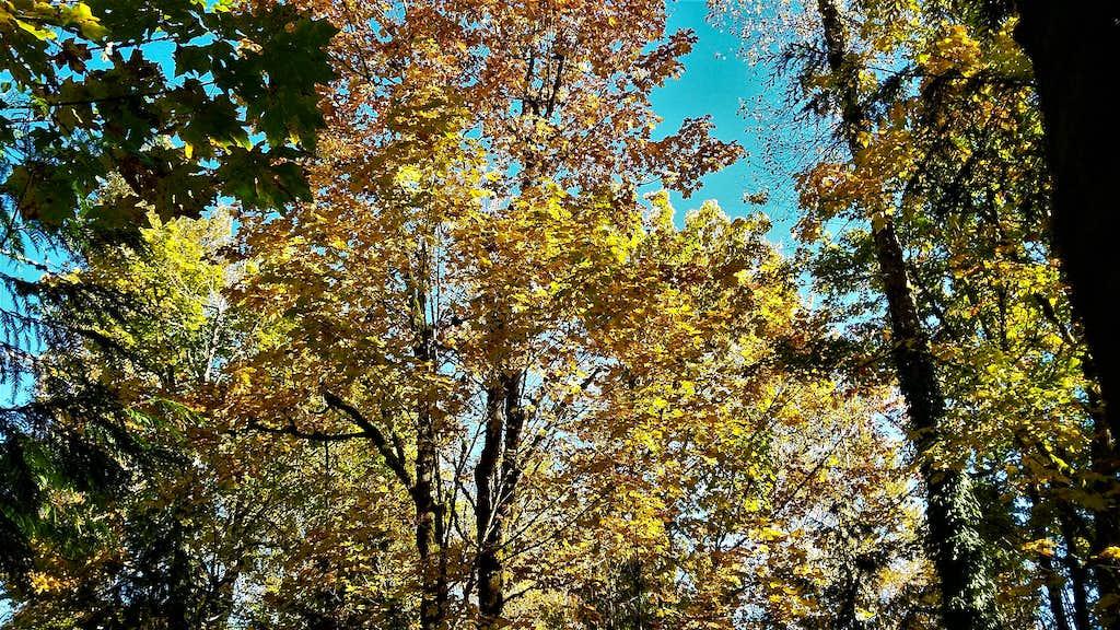 Fall colors on Cedar Mountain