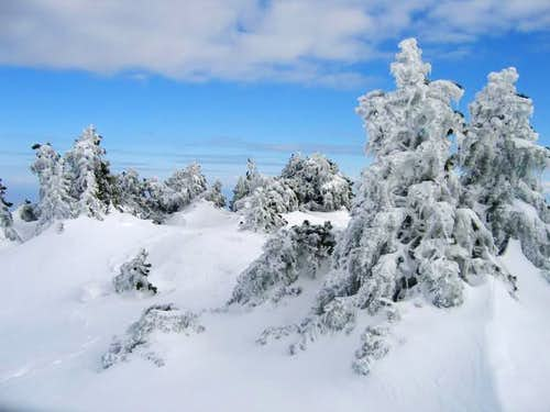 Frozen trees close to Reculet