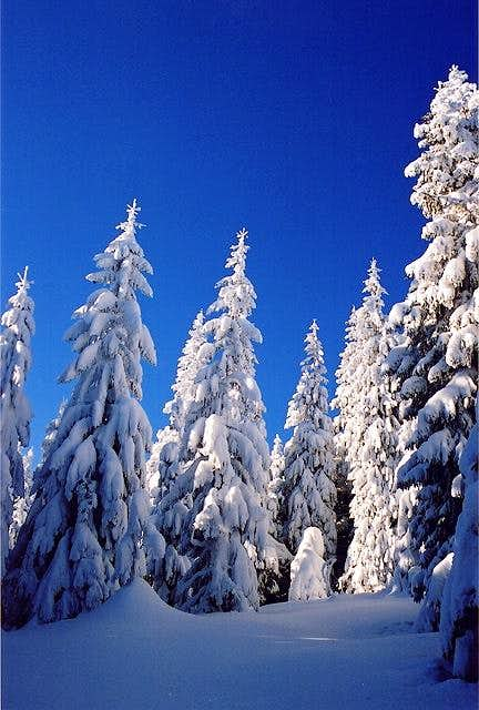Beskidian forest in winter 