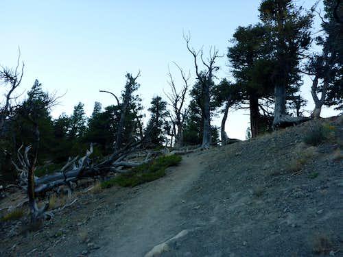 Borah Trail