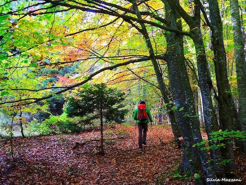 Wandering in the forest near Tezze, Vallarsa