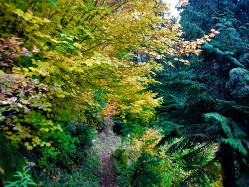 Vine maples on the way to Hope Lake