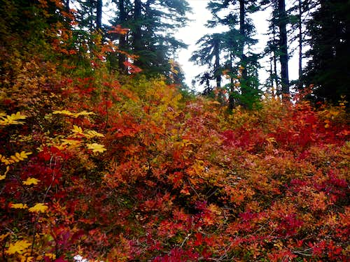 Vine maples by to Hope Lake
