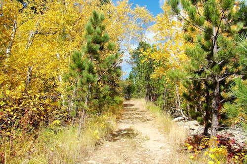 Autumn on the Mt. Roosevelt Trail