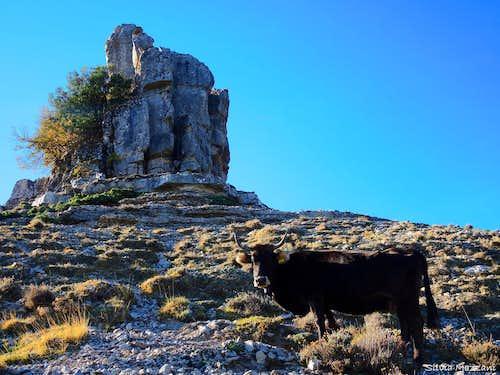 Unexpected encounter on Perda 'e Liana basal slopes