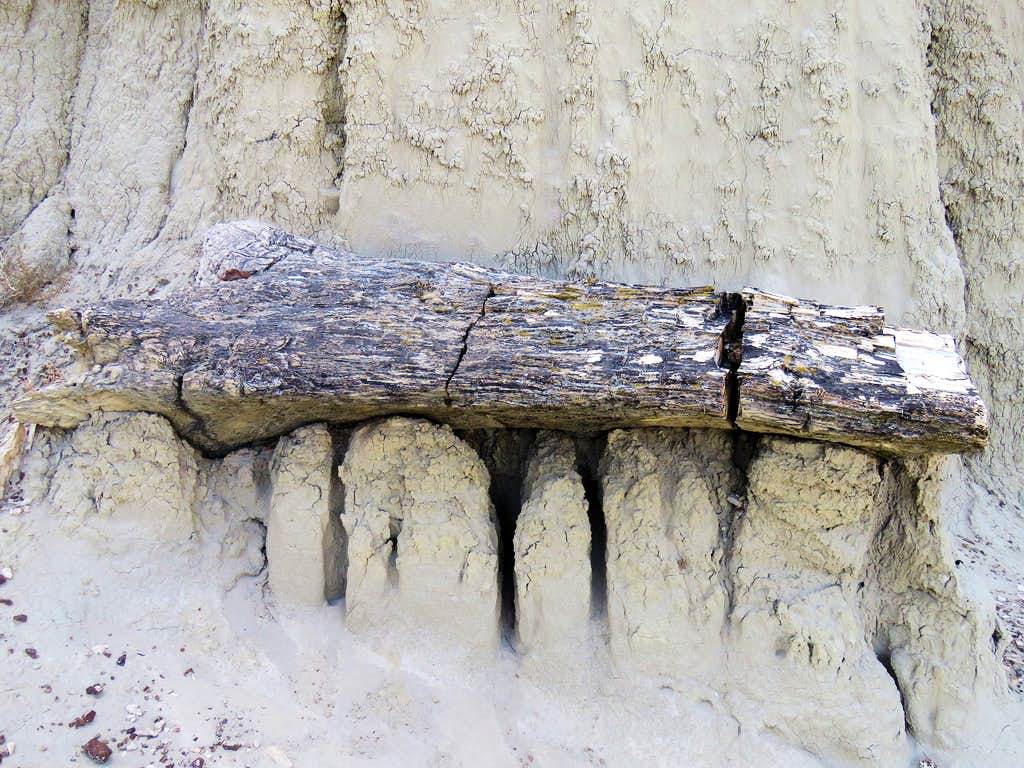 Petrified Log 1 area