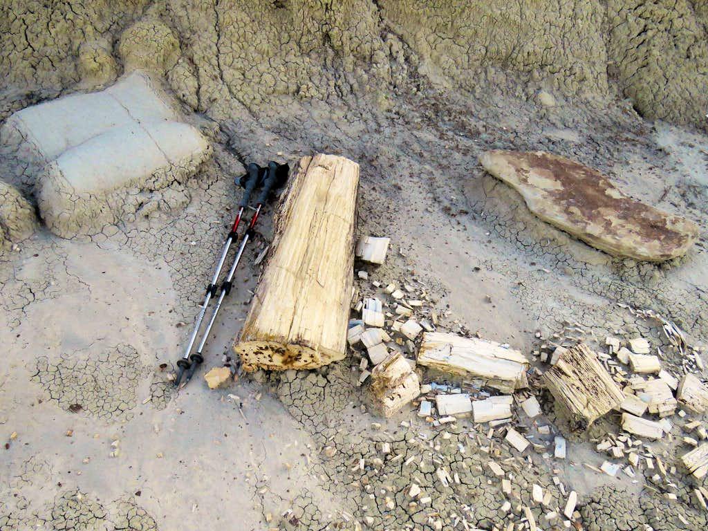 Petrified Log 3