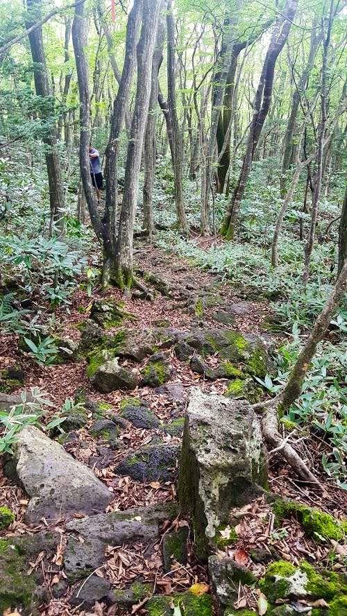 Wooded Area Donnaeko Trail