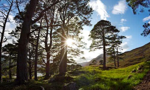 Glen Affric in colour