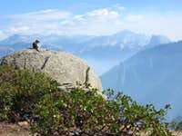 Golden-mantled Ground Squirrel Enjoying the View From Crocker Point