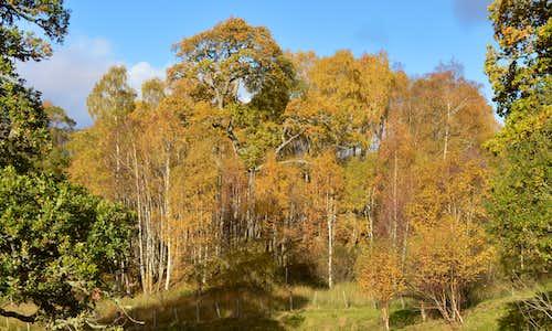 Autumn colours Guisachan Estate