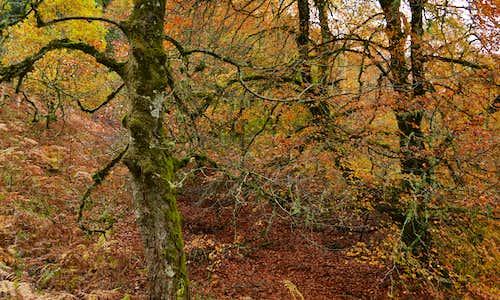 Autumn colours Guisachan Forest