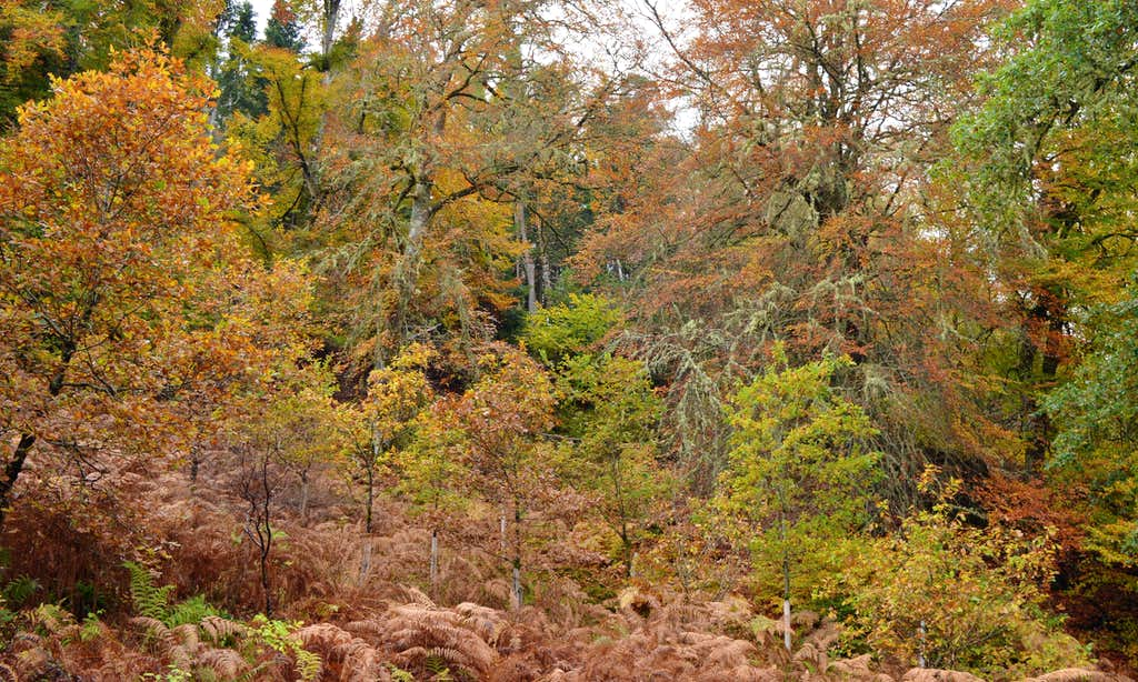 Autumn colours Guisachan Forest