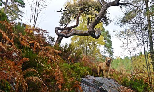 Dog Falls & Coire Loch circuit