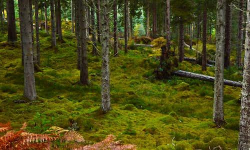 Guisachan Forest