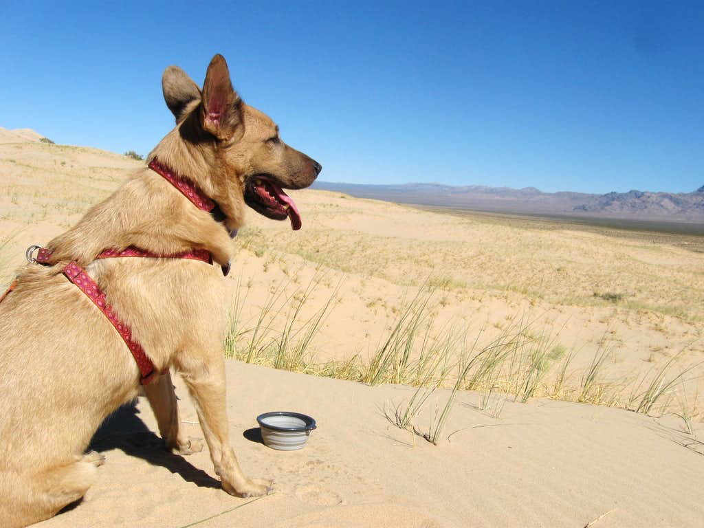 Dune Beast