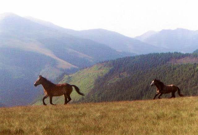 Horses near Tarnita Batrinei....