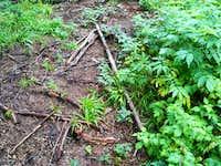"""Trail marker"""