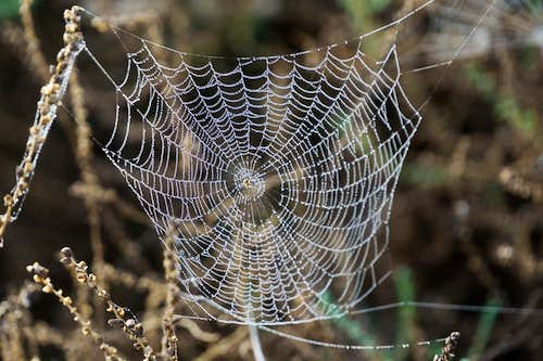 Drenched spider's web