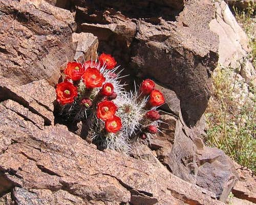These cactus flowers were...