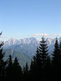 Kamnik Alps between the pine...