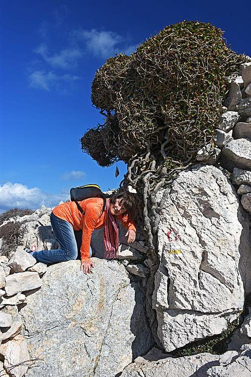 Completing the climb on Diviska