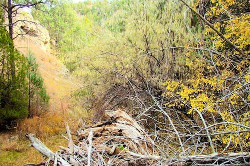 Adams Canyon Flash Flood Debris