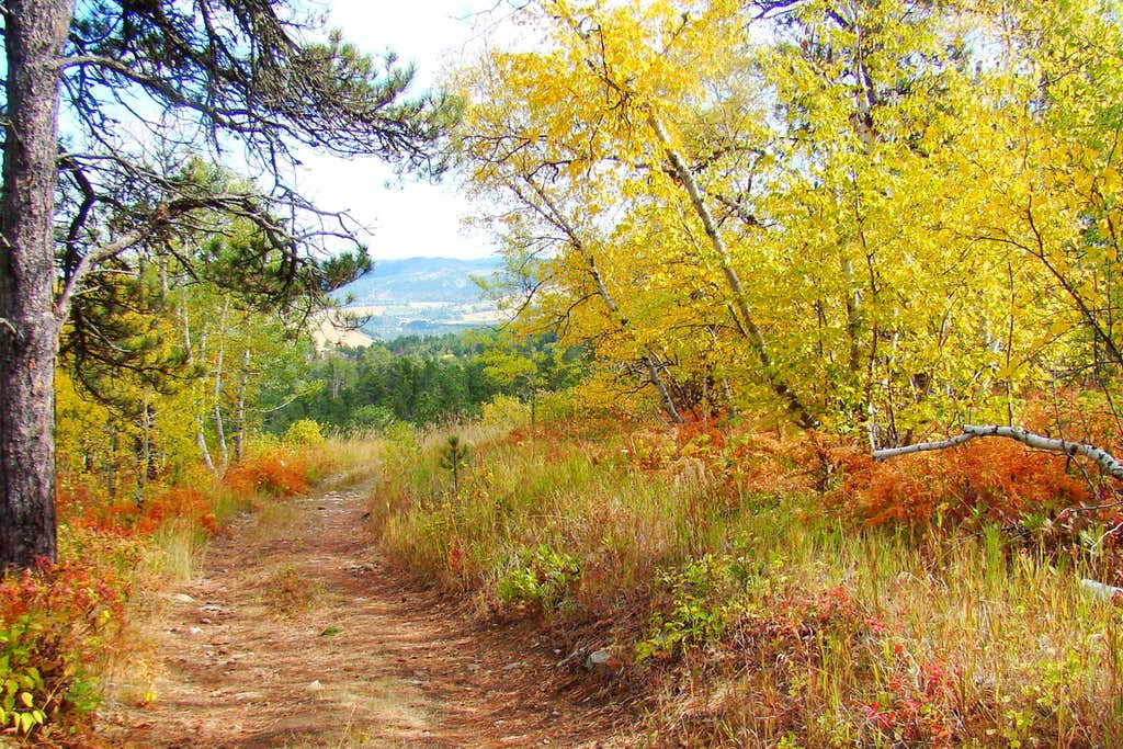 Autumn Color on Mt. Roosevelt Trail