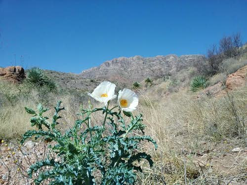 Franklin Mountains State Park, TX