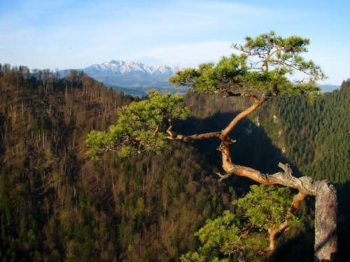 Tatras from Sokolica