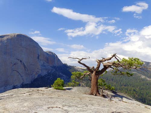 Atop Liberty Cap looking at the back side of Half Dome 08-09-2014