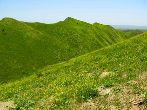 Green Land!