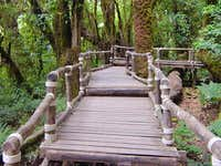 A 1.5 km. forest boardwalk...