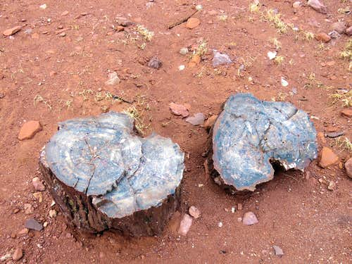 Petrified wood on Cooks Mesa