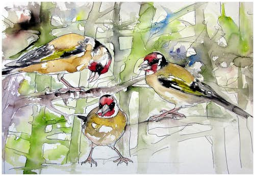 Wildlife in Trentino: sketches in pencil and watercolor