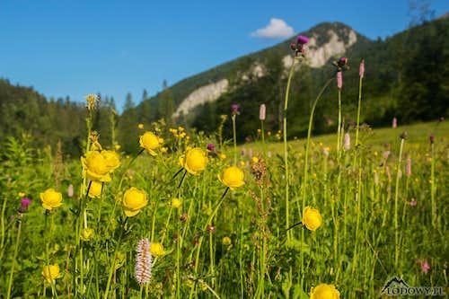 Blooming June in Tatras