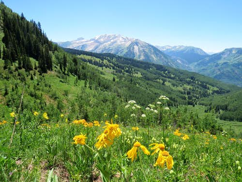 Flowers & Treasure Mountain