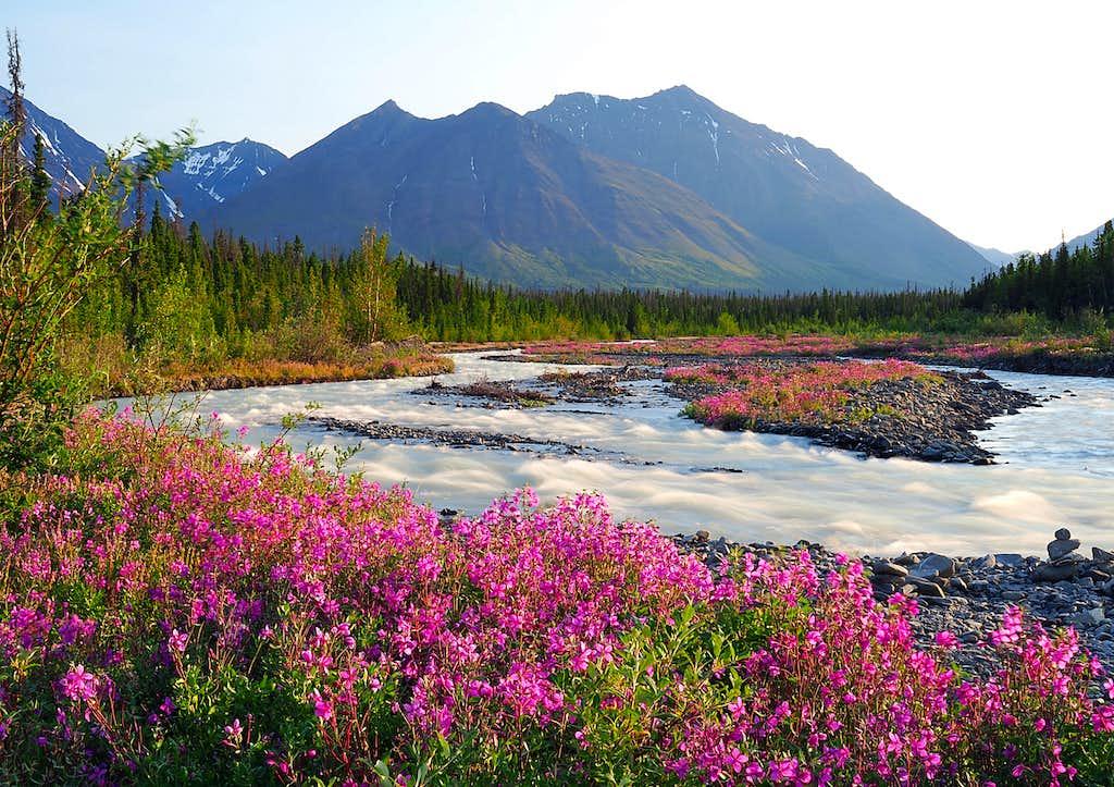 Yukon Beauty