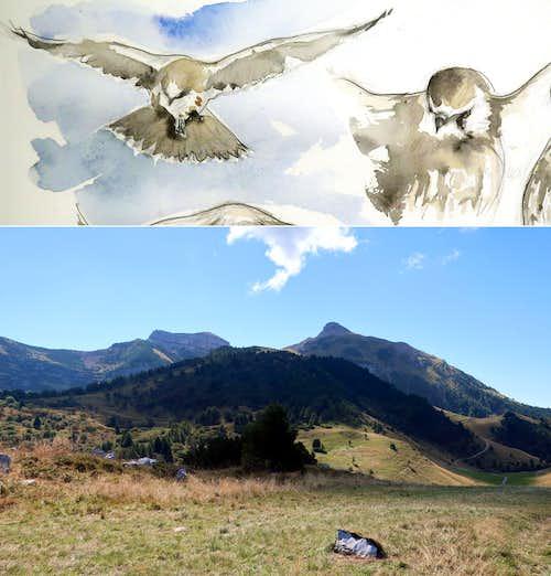 The kestrel hunting on Mount Bondone