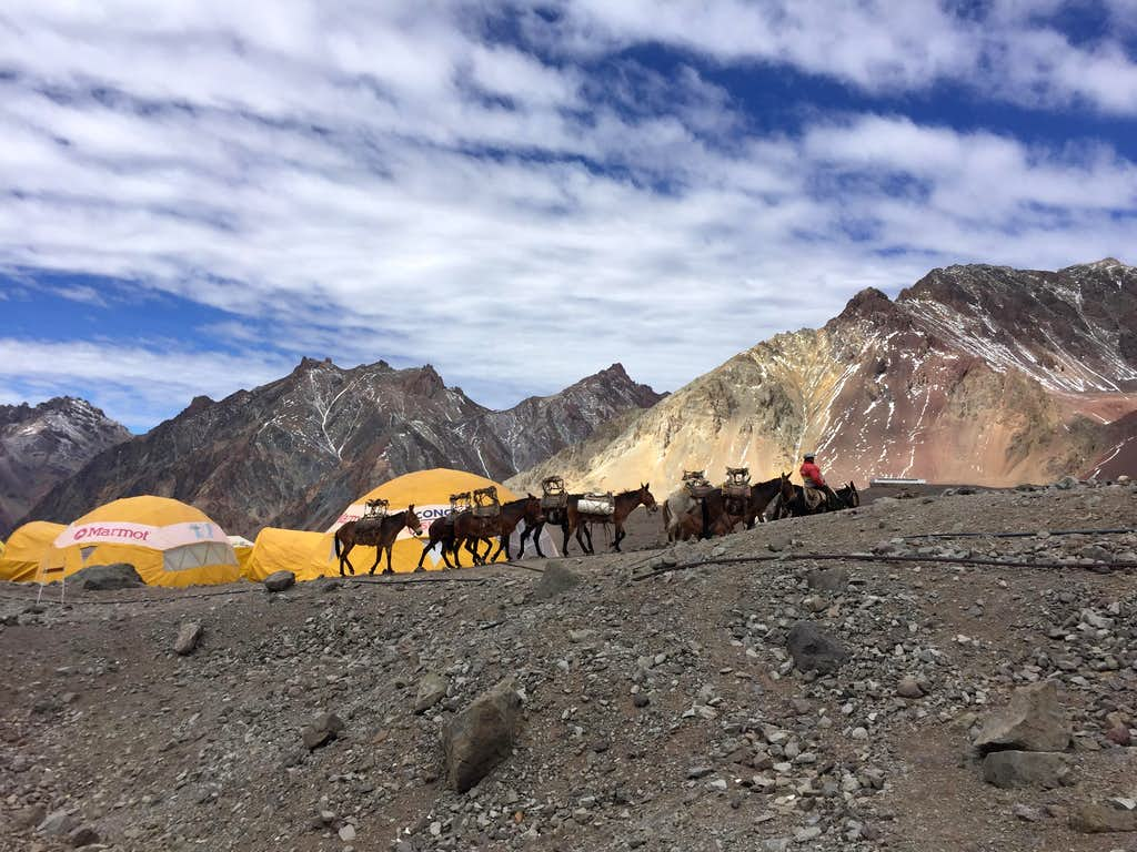 Mules in Base Camp Plaza de Mulas, Aconcagua