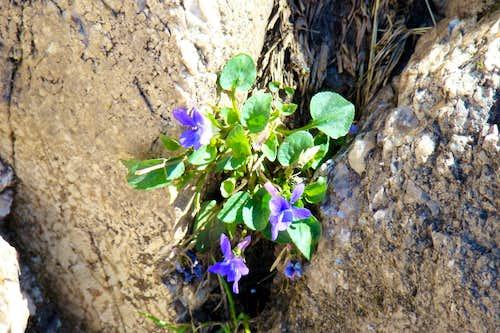 Wildflowers on Little Devils Tower